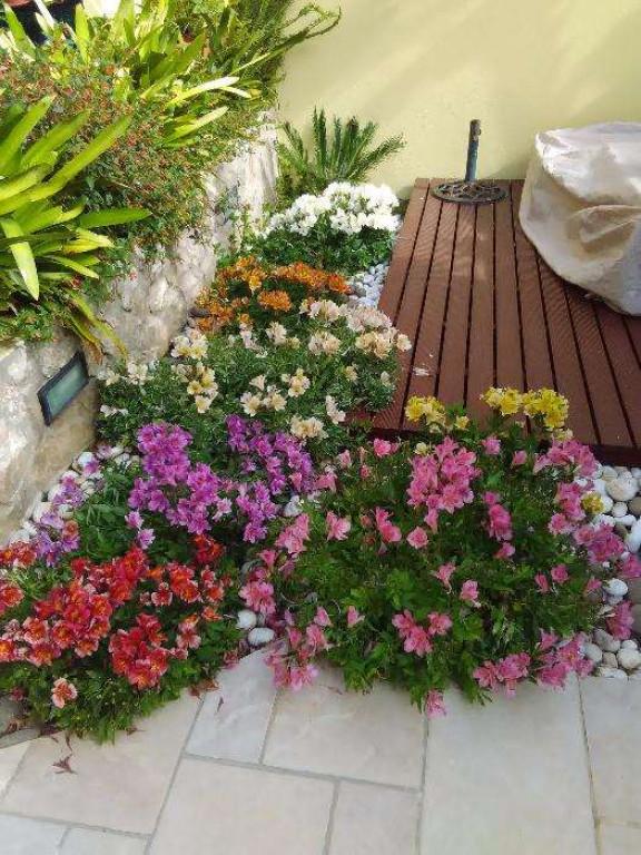 portfolio 2/5  - Flores Naturais e Pedras Brancas
