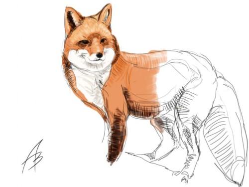portfolio 1/14  - ilustracao exp1