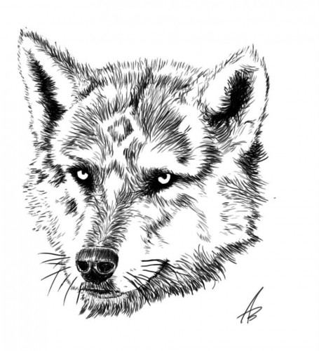 portfolio 4/14  - ilustracao exp2