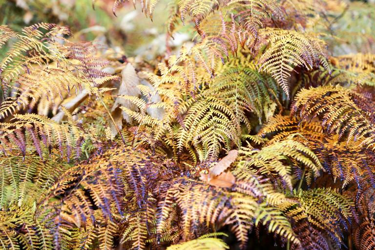 portfolio 1/11  - autumn colors