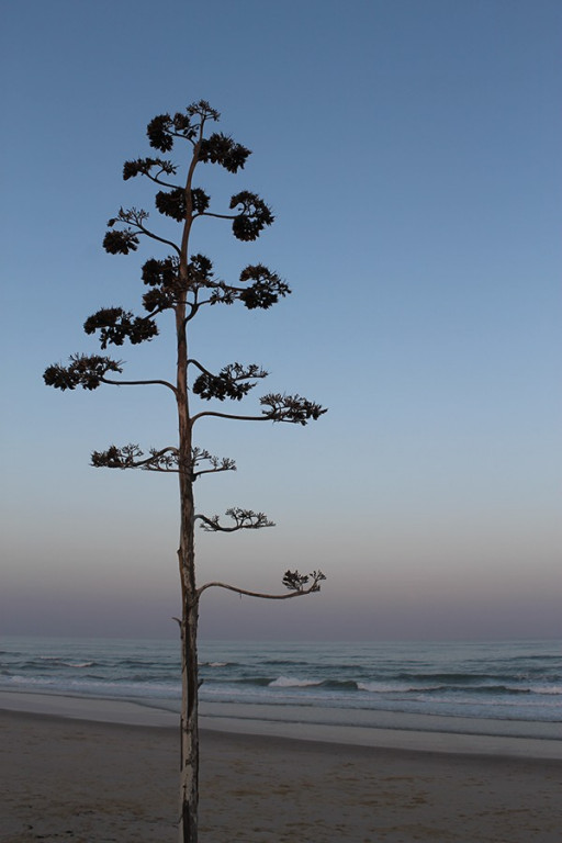 portfolio 7/11  - my island