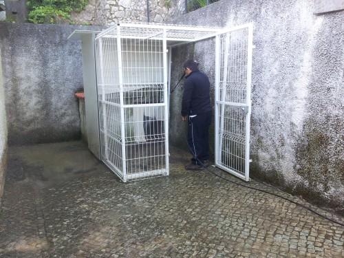 portfolio 199/236  - lavagem de canis