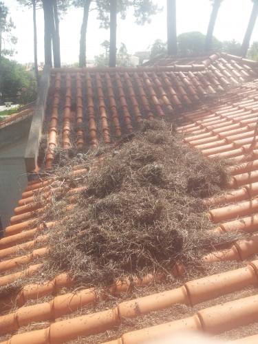 portfolio 189/236  - limpeza de telhados