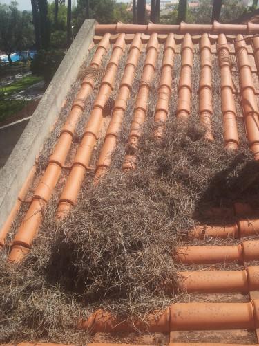 portfolio 188/236  - limpeza de telhados