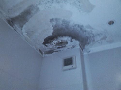 portfolio 347/449  - Reparação tecto WC
