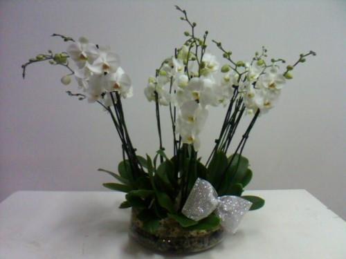 portfolio 4/9  - Base vidro Orquideas