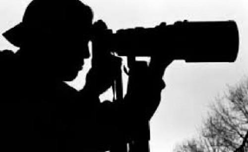 portfolio 9/10  - Detective profissional
