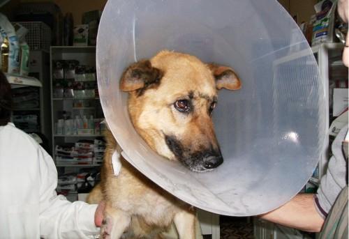 portfolio 9/10  - Ida ao veterinário fazer curativos,