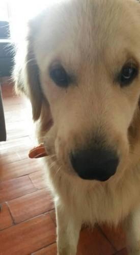 portfolio 4/5  - Representação do ar saudável do meu cão