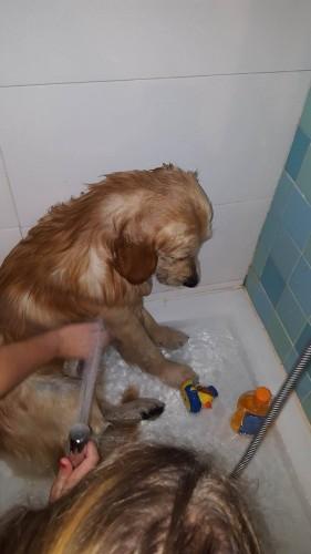 portfolio 1/5  - Experiência a dar banhos a cães
